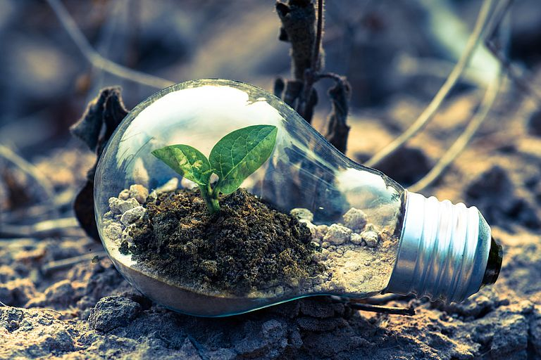 Grüne zarte Pflanze in einer Glühbirne